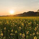 Sunset field by Mattia  Bicchi Photography