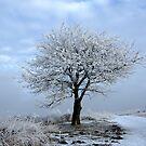 Rowan Tree in Winterdress by ienemien