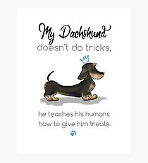 My Dachshund - Wire Hair (Blue) Photographic Print