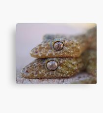 Broad Tailed Gecko Australia Canvas Print