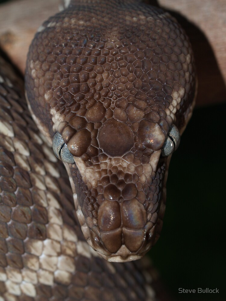 Rough Scaled Python by Steve Bullock