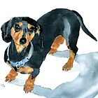 Sophie the Dachshund by Yvonne Carter