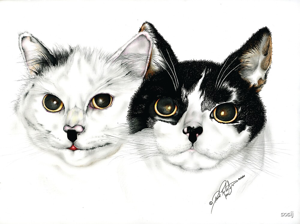My mates cheeky we cats  by sosij