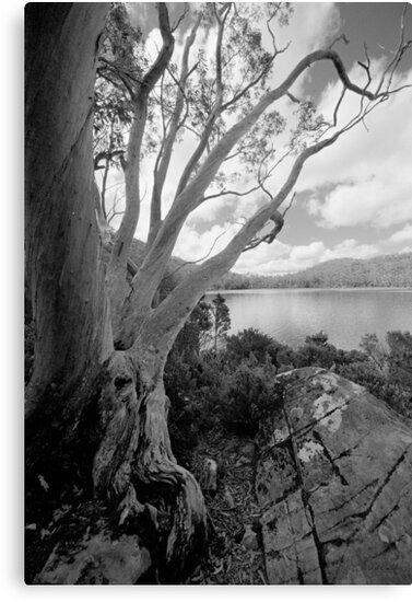 Mt Field - Tasmania by Stephen Kilburn
