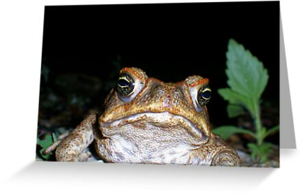 """""""toadally"""" bored by Jodie Carruthers"""