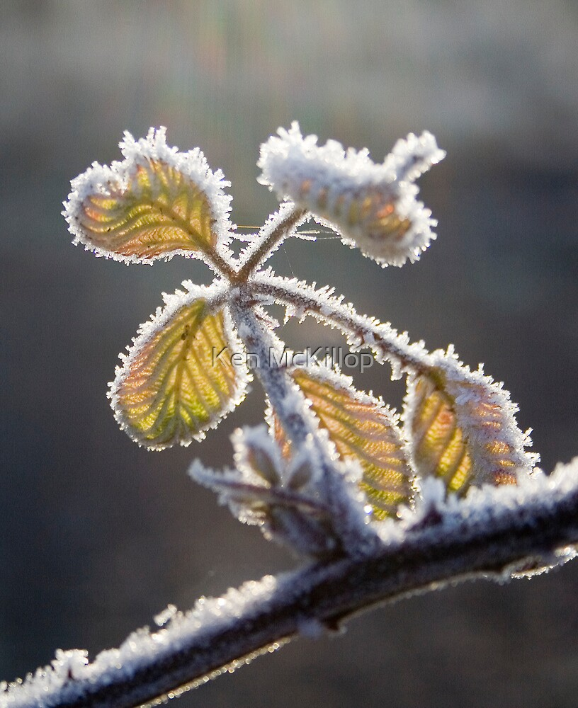 winter brambles by Ken McKillop