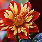 Flower ... by autumnwind