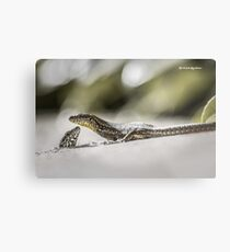 The charming lizards Metal Print