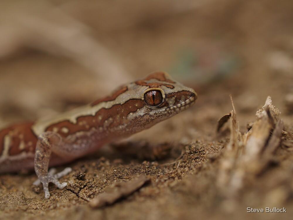 Box Patterned Gecko by Steve Bullock