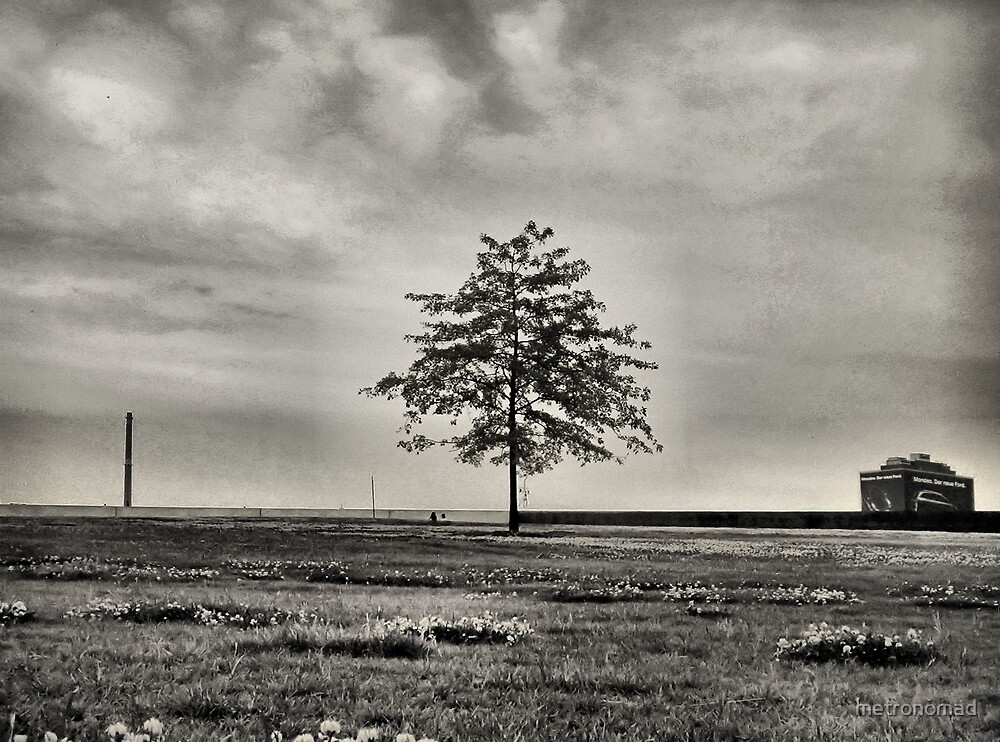 The Lone Tree by metronomad
