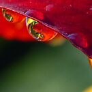 RAINDROPS by clou2