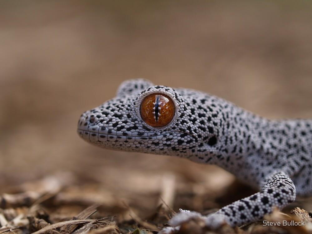 Golden Tailed Gecko Macro by Steve Bullock