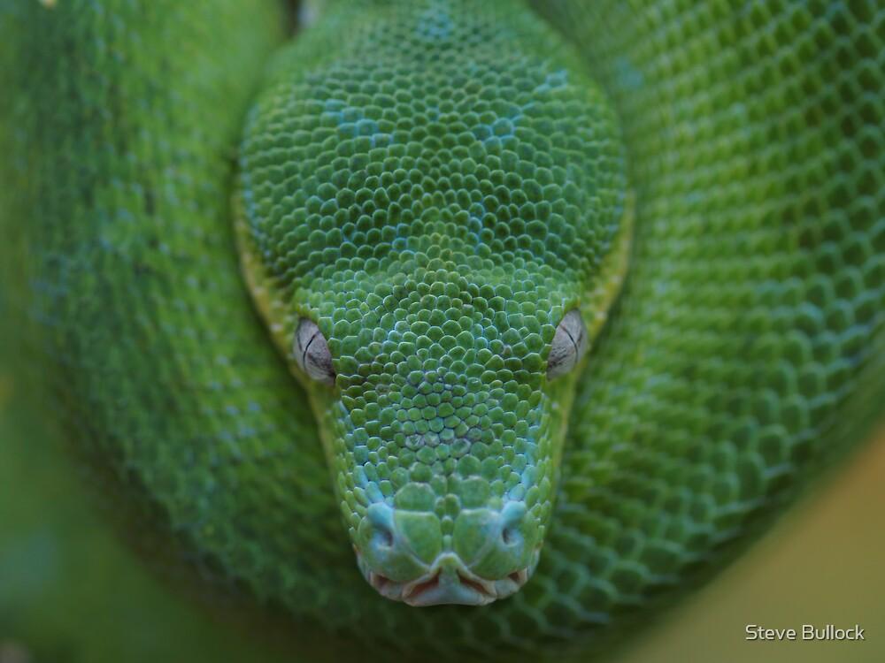 Peace - Green Tree Python by Steve Bullock