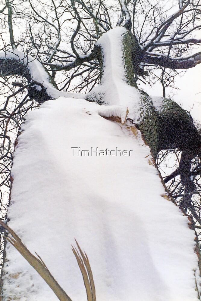 Cold, Broken, Still Fighting.  by TimHatcher