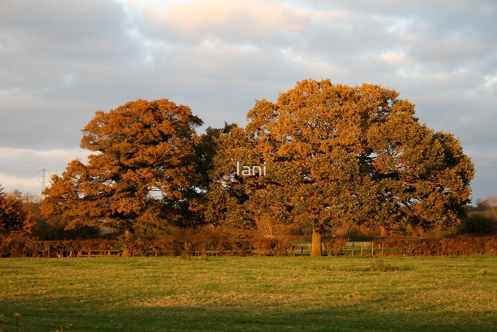 autumn light on trees by Iani