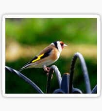 Profile of a Goldfinch Sticker