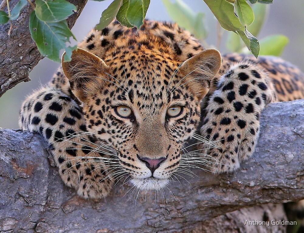 Schöne Augen !! von Anthony Goldman