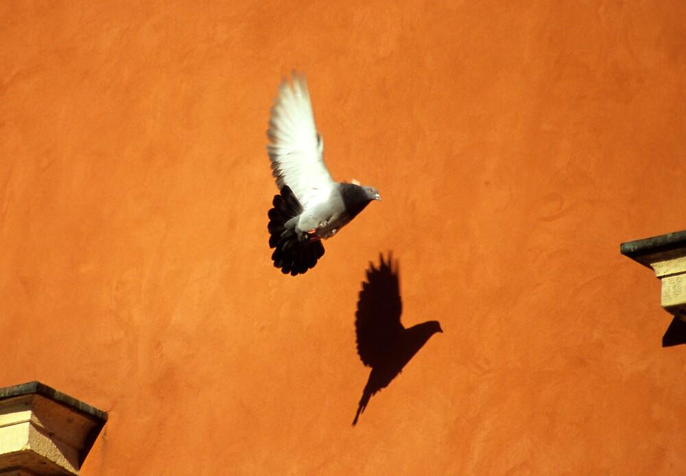 Casting Shadows in Flight by Kasia Nowak
