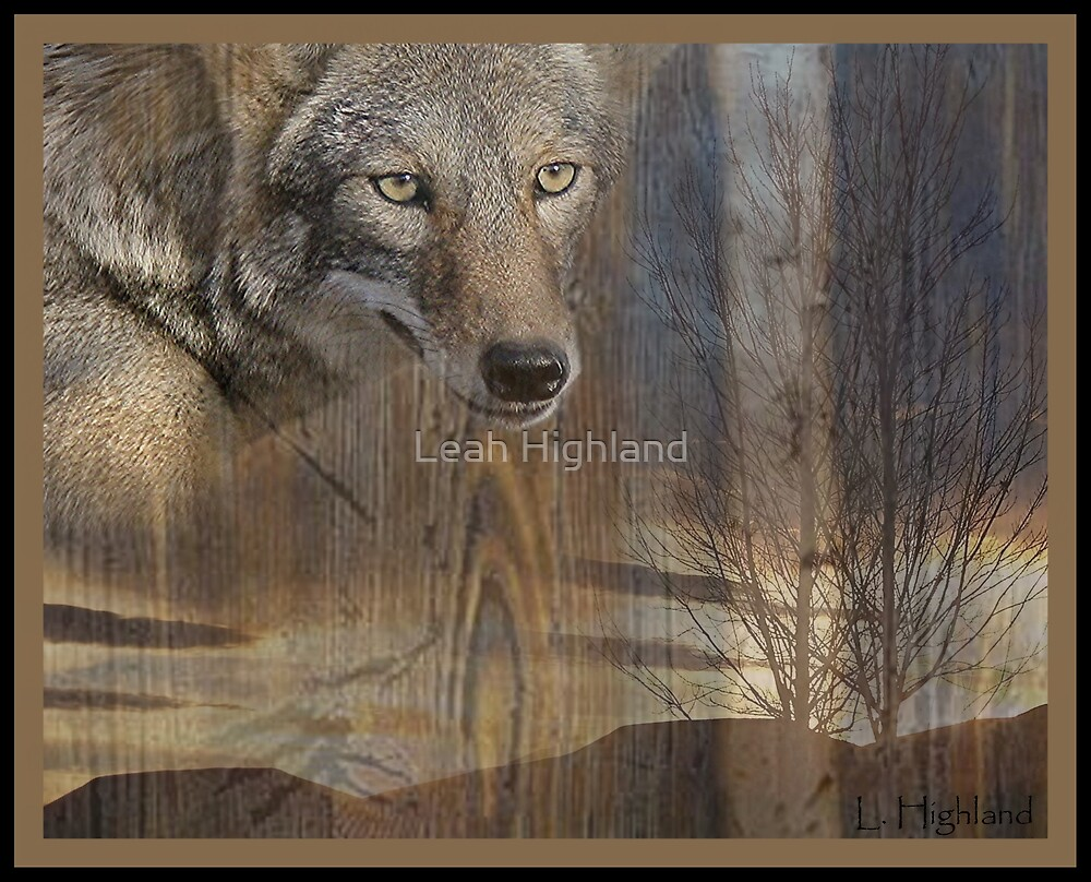 Coyote Wild by Leah Highland