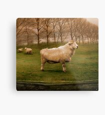 The Pride of Chester Metal Print