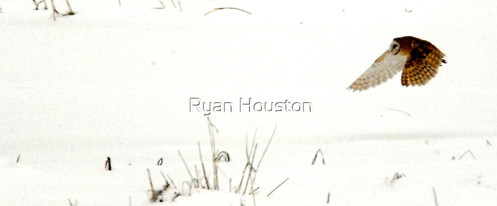 Barn Owl Snowy Landscape by Ryan Houston