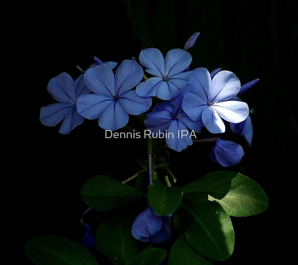 A bit of blue by Dennis Rubin IPA