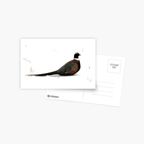 Snowbank Pheasant Postcard