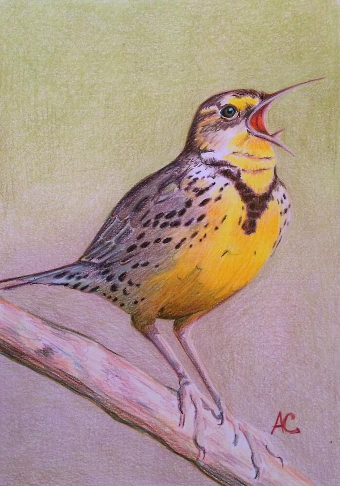 Meadowlark by WyoClements