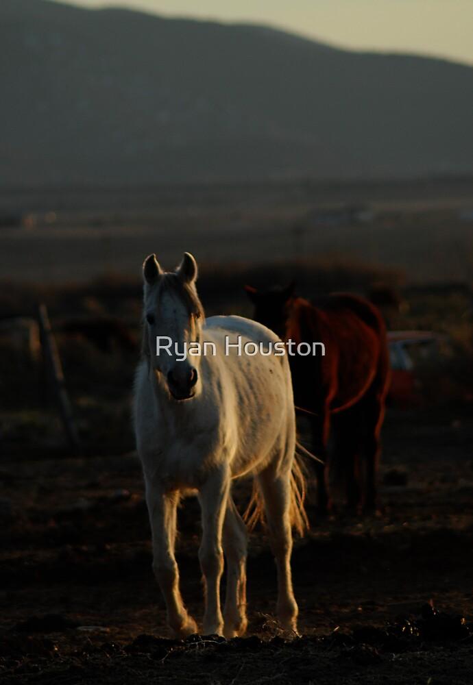 White Horse at Sunset, Parowan, Utah by Ryan Houston