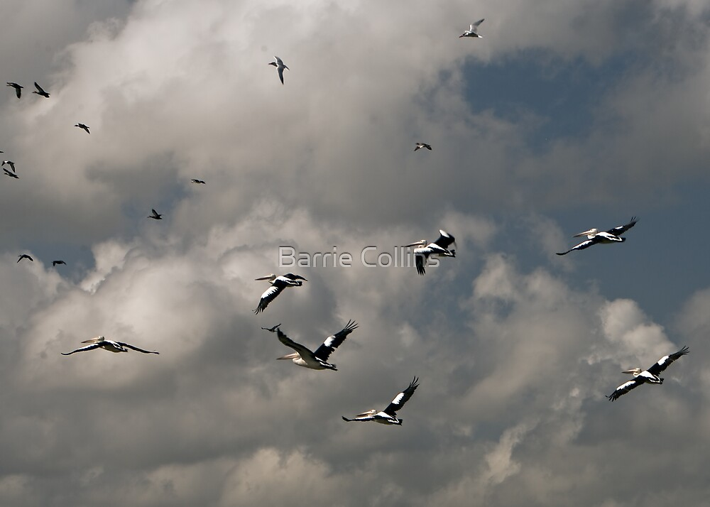 Clouds and birds by Barrie Collins