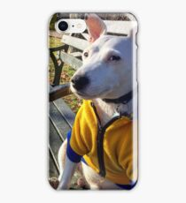JACK RUSSELL TERRIER (DBo) iPhone Case/Skin