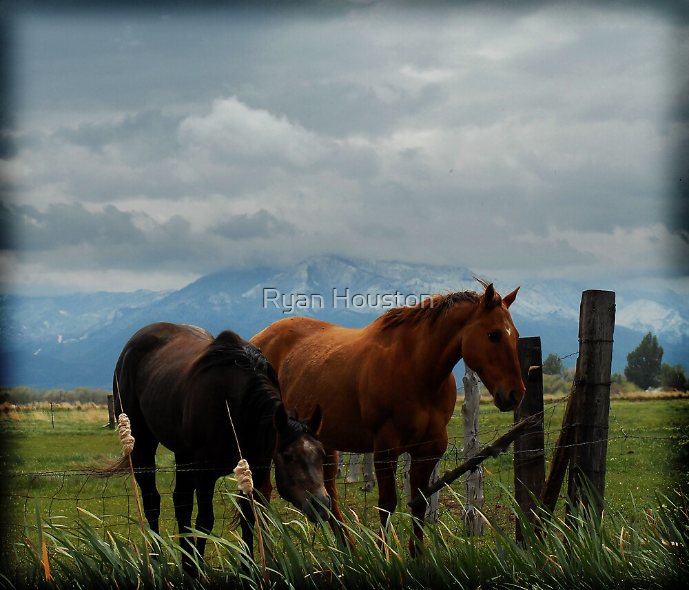 The Grass is Greener by Ryan Houston