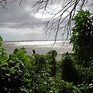 View from Chaco Verde, Ometempe, Nicaragua by Kurt  Van Wagner