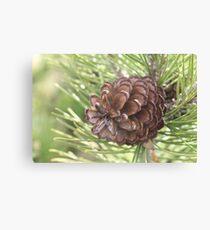 Pine close-up Canvas Print