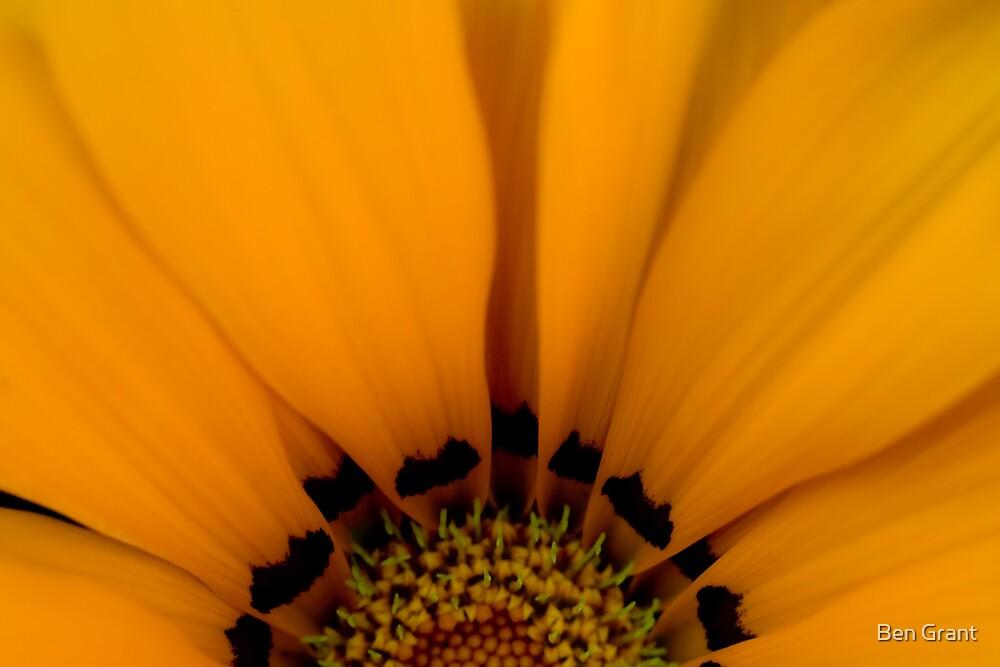 Living Sunshine by Ben Grant