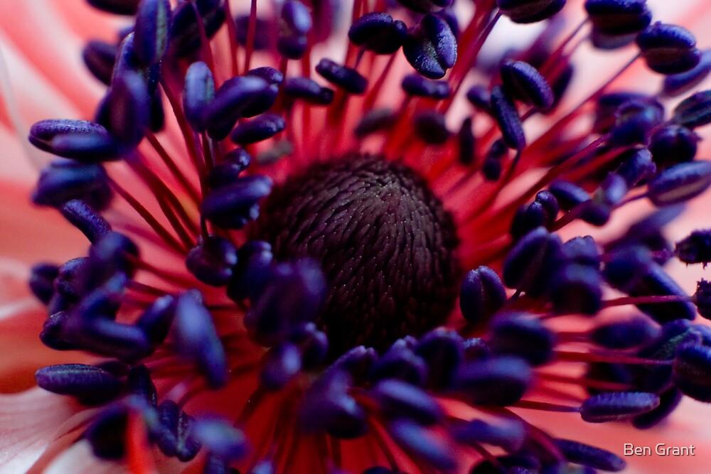 Springtime Flower by Ben Grant