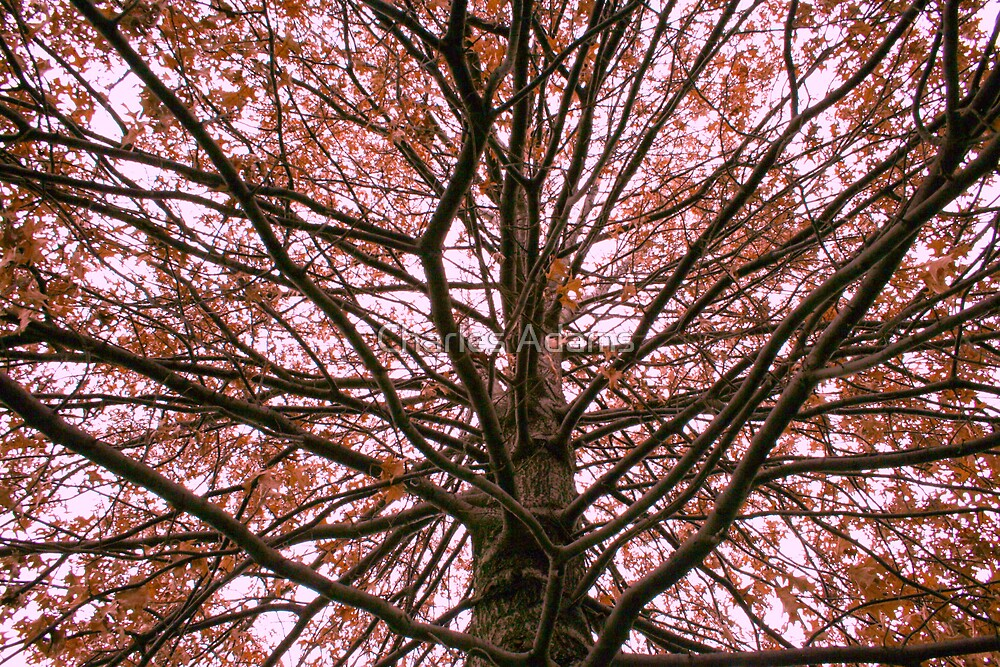 tree by Charles Adams