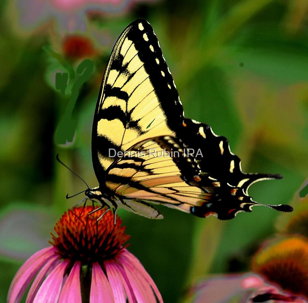 Black Swallowtail on Red by Dennis Rubin IPA