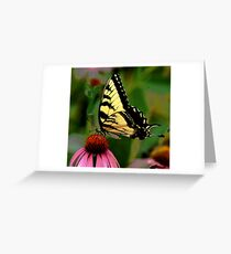 Black Swallowtail on Red Greeting Card