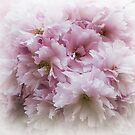 Pink Frills by Christine Lake