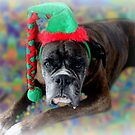 Boxer, der von den Weihnachtsplätzchen träumt von Evita