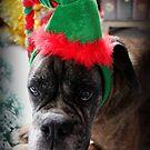 Ein Boxer-Weihnachten - Weihnachtskarten-Reihe von Evita