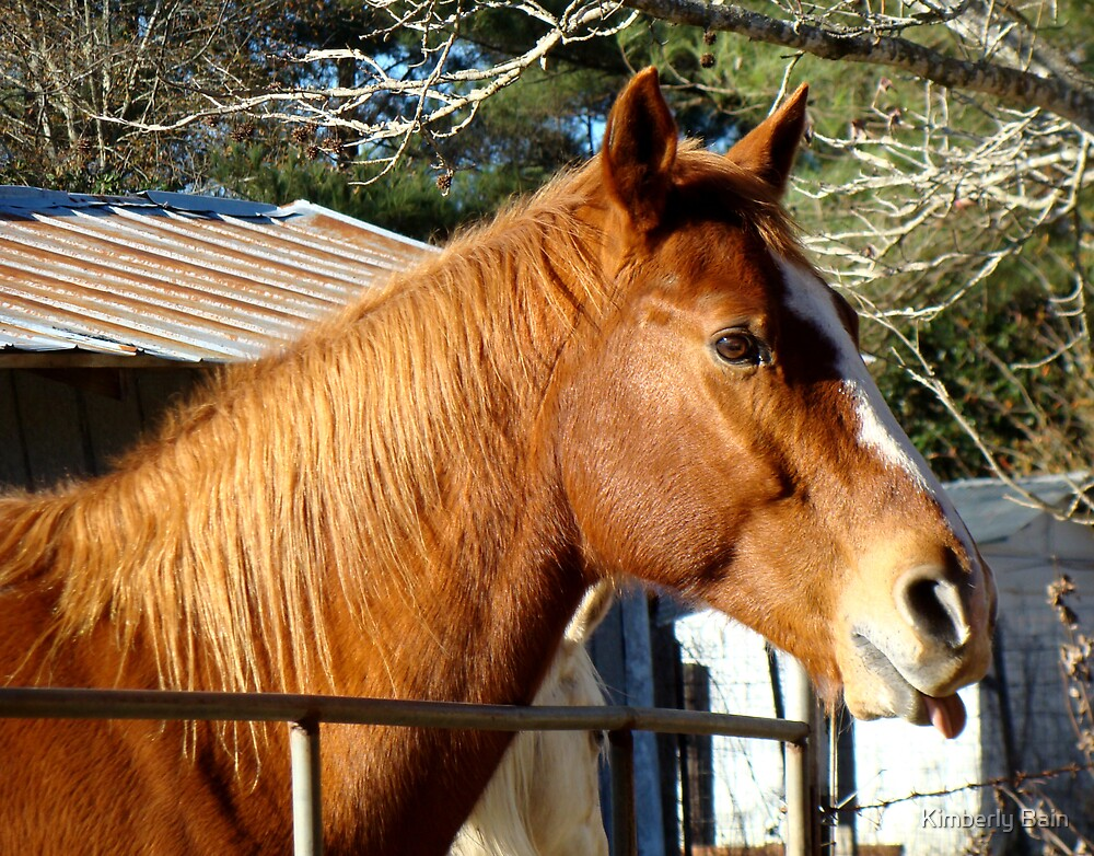 Horse Sticking Out Tongue by Kimberly Bain