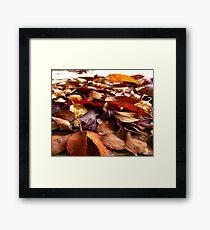 Fall Leaves Away Framed Print