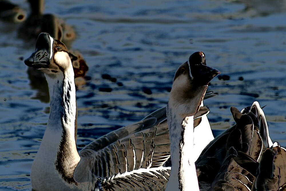 goose! goose! by seandraper