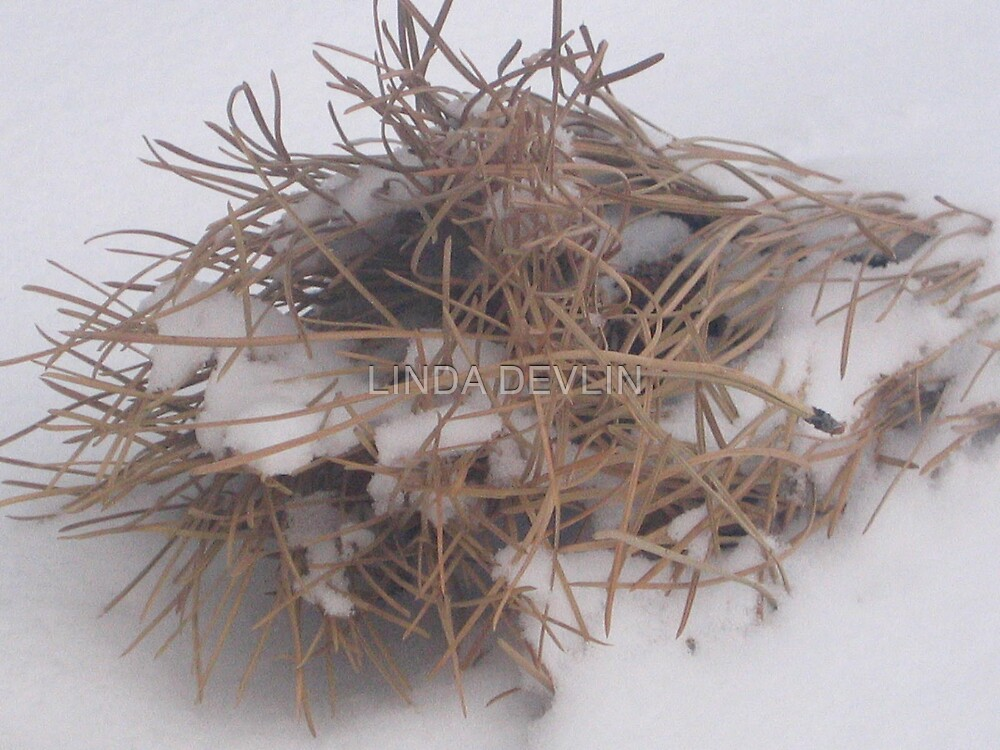 fallen nest 2 by LINDA DEVLIN