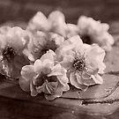 Springtime by Evita