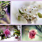 Impressionen des Frühlings von Evita