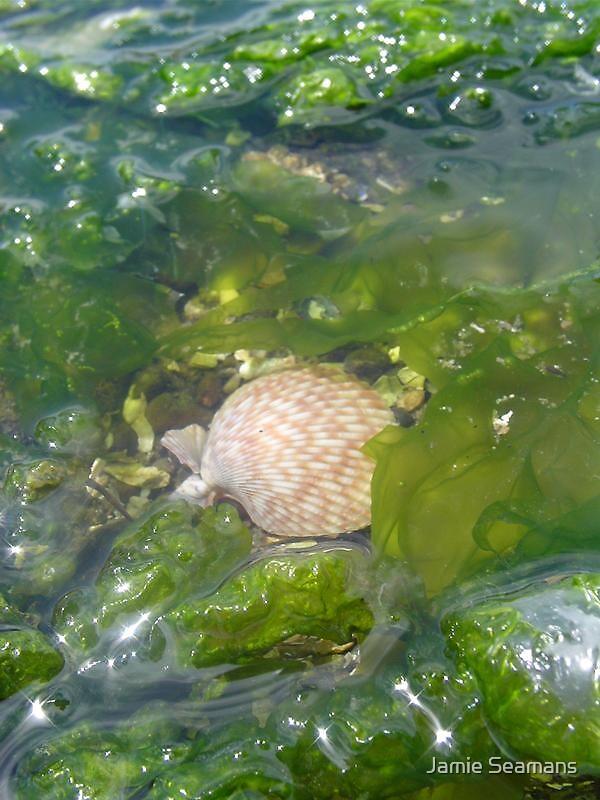 sea shell by Jamie Seamans