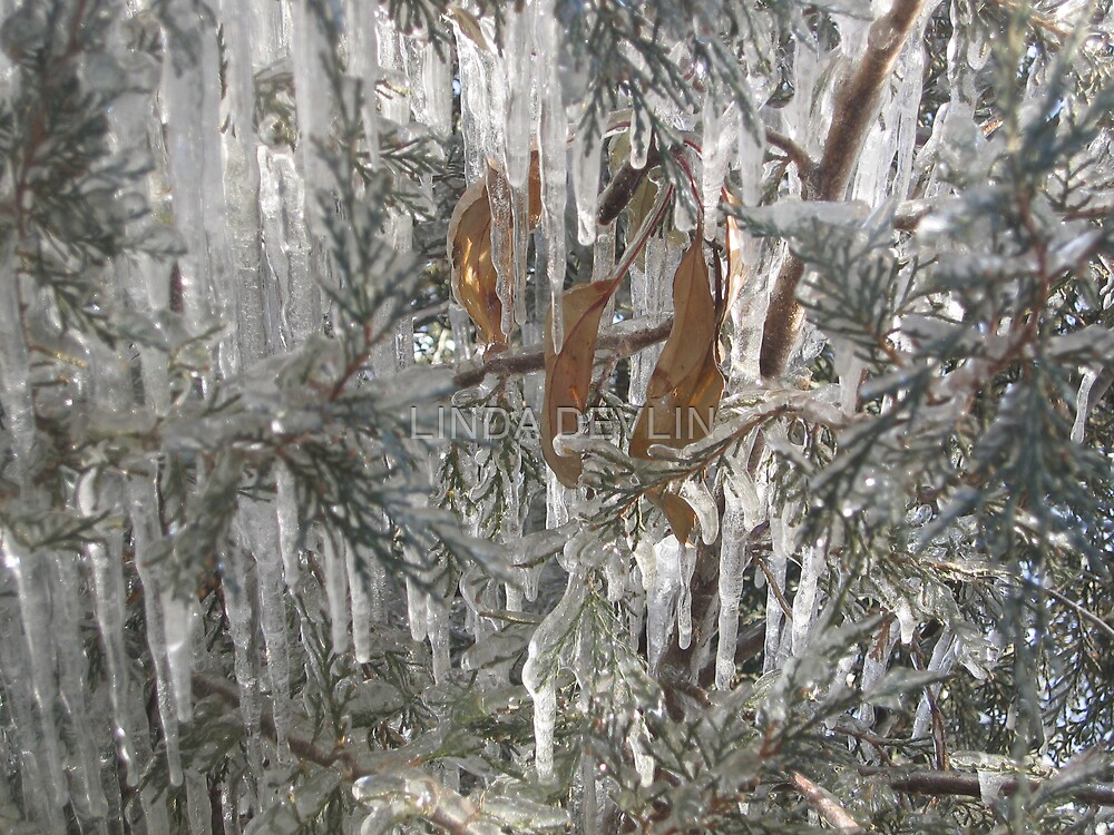 leaves frozen in icy chimes by LINDA DEVLIN